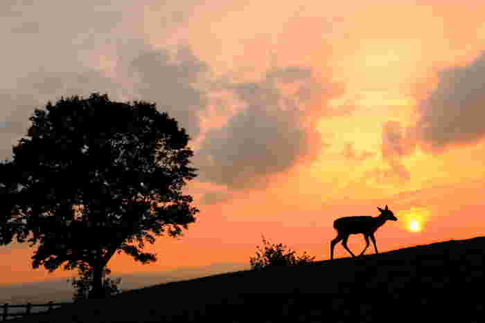 夕日と鹿のシルエットが美しい一枚。なんだか絵本の中のような世界です*