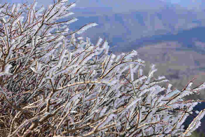 山頂の木々に霧氷が覆い、すっかり冬の装い。見ているだけでぶるっと身震いしてしまいそうですね。10月下旬から山頂には冬の便りが届きますが、11月以降だと霧氷に出会える可能性がぐっと高くなます。麓は秋なのに山頂は真冬…というギャップを体験できますよ。
