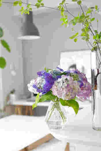 濃いめの青紫や、紫、赤紫、そして、うっすらとしたピンク色、まっさらな白まで……。一つの花の中で、いくつもの色のグラデーションを楽しめて、ただ眺めるだけで心が潤いますね。