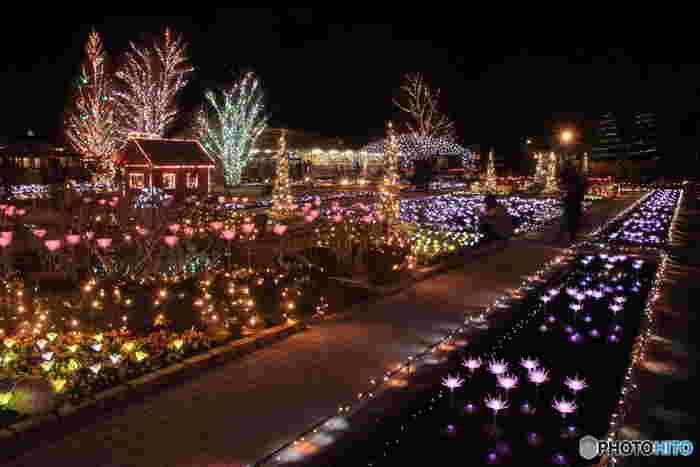 夜のライトアップも定評があります。 県外からわざわざ、夜のフラワーパークを目的に来る人も多数いるそうです。
