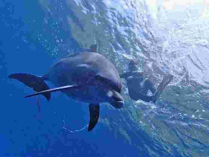 100%イルカに出会える?!ドルフィンスイムにウォッチング♪東京「御蔵島」で夏の思い出を作ろう