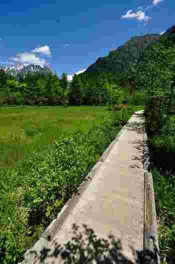 河童橋から梓川を下流へ向かい緑の木々の中を歩いて行くと、ぽっかりあいた箱庭のような美しい湿原に出くわします。