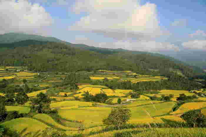 樫ノ川沿いに広がる吉延の棚田は、村の山頂近くまで田んぼが広がっています。美しい山容と、折り重なる水田が織りなす風光明媚な景色は訪れる人々を魅了してやみません。