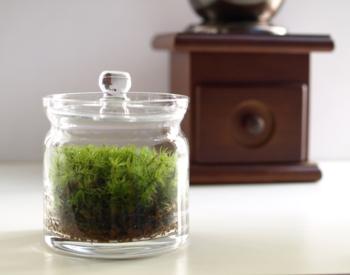 ガラス容器の中で育てて楽しむ「小さなコケの森」。この中で、シッポゴケを育てることができます。 乾燥に弱い種類のコケも比較的容易に育てられるので、お部屋のインテリアにおすすめです。