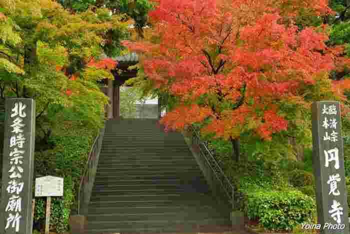 """初秋の緑が残る紅葉も清々しいですね。移り行く""""秋""""を楽しませてくれる「総門」の紅葉。"""