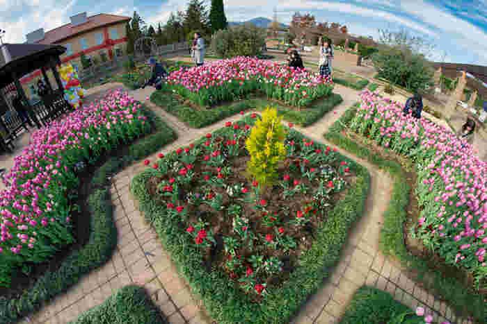 """花菜ガーデンは、季節の花々を鑑賞できる""""フラワーゾーン""""、田植えや稲刈りなどの農業体験ができる""""アグリゾーン""""、農業・園芸に関する学習広場となっている""""めぐみの研究棟ゾーン""""から成る神奈川県立の複合型植物施設です。"""