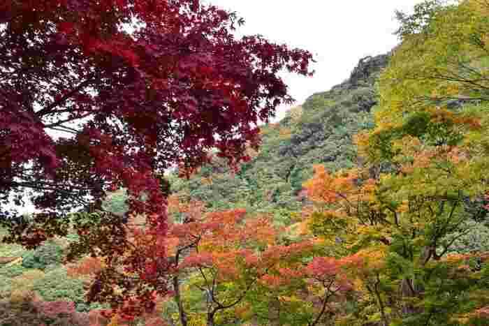 錦繍の秋に魅せられて…近畿地方での紅葉の名所を訪れよう【大阪府南部編】