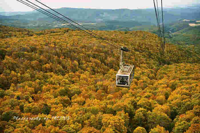 こちらはロープウェーで紅葉狩りができる八甲田山。八甲田山をはじめ、早いところでは9月下旬から紅葉が始まるところも。全国でも一足早い紅葉を見ようと、日本各地から大勢の観光客が訪れます。