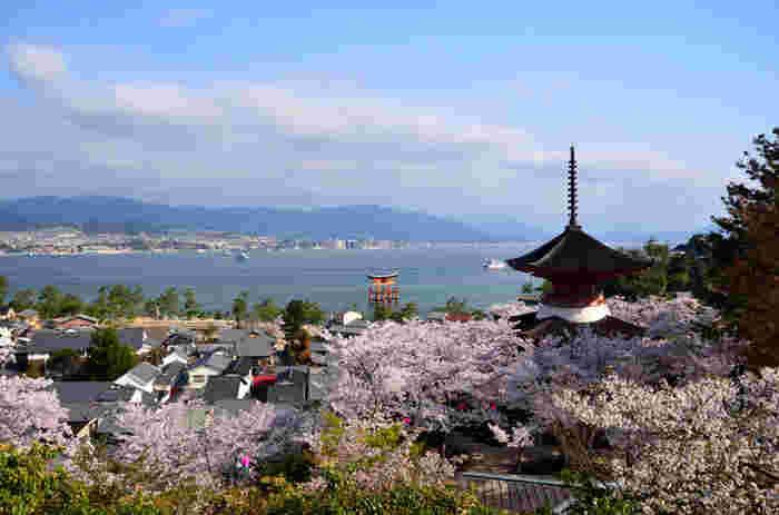 桜の季節は穏やかな春の海を背景に、朱色の大鳥居や五重塔と桜のコラボレーションを堪能することができます。