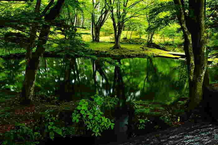 明治時代から避暑地として、国内外の著名人から愛されてきた軽井沢。たくさんの別荘やホテルが建てられていますが、手付かずの自然も多く残っています。