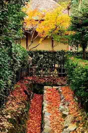 「落柿舎」の庭には、樹齢300年の柿の木の他、俳句の季語となる100種もの草木が植えられ、四季折々様々な表情を楽しむことが出来ます。