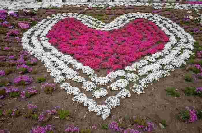 みさと芝桜公園では、濃ピンク、白、紫色などの芝桜を使ったフラワーアートのデザインが施された花壇があります。可愛らしくアートされた花壇を眺めていると、不思議と心が癒されてくるような気分になってきますね。
