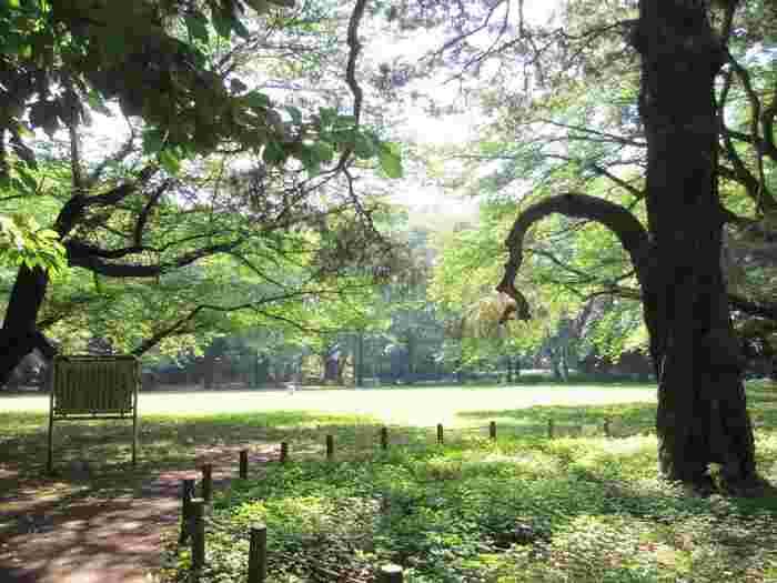 駒場公園は、現在の石川県(加賀百万石)の当主・前田利為侯爵邸の跡地です。昭和4年に建てられた化粧レンガやタイル張りが美しい洋館、昭和5年に建てられた書院造りの和館は、昭和初期の粋を集めた建築として現存しています。また、自然の巨木を生かして名石を配した奥庭や芝生広場など、昭和50年から現在の緑豊かな公園として親しまれています。そして、和館北側に1967年に建てられた日本近代文学館があります。