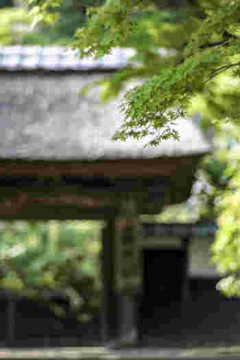 鎌倉は観光で足を運んだ人が楽しめるよう、昔ながらの自然を美しく保ち続けています。緑をうまく取り込んだ窓、外の風を感じるテラスが鎌倉にはたくさんあります。旅の一つの思い出に、豊かな自然にも目を向けてみてくださいね。