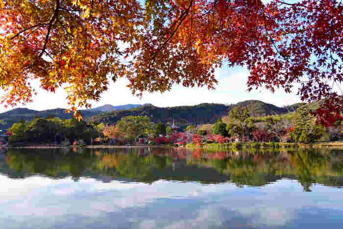 平安時代初期に、嵯峨天皇の離宮として建立された邸宅を寺院として改められた大覚寺は、広いエリアにおよぶ嵯峨野でも屈指の紅葉の名所です。特に、国の名勝に指定されている大沢池の美しさは格別です。静かな水面が、鮮やかに彩った樹々と背後の緑の山々を鏡のように映し出す様は、一枚の掛け軸のような素晴らしさです。