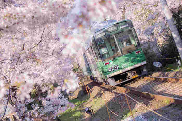 もうひとつの見どころは、レトロな雰囲気がかわいい「嵐電(らんでん)」から見ることのできる桜のトンネル。嵐電(嵐山本線)は、嵐山から四条を結ぶ路面電車で、観光客はもちろん地元のひとにも愛される人気の列車。鳴滝駅と宇多野駅の間、約200mの桜のトンネルは、乗車したひとしか見ることのできない特別な景色です。
