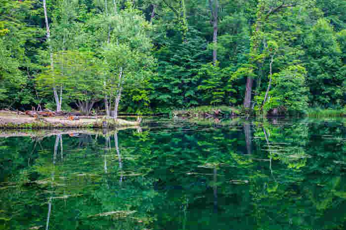 豊かな原生林が生い茂った鳥沼公園は、富良野市郊外に位置しています。約9.6ヘクタールに及ぶ敷地内には、透明度の高い湧水の沼があります。静かな水面が鏡のように周囲の緑を映し出す様は神秘的で、この世のものとは思えないほどの美しさです。