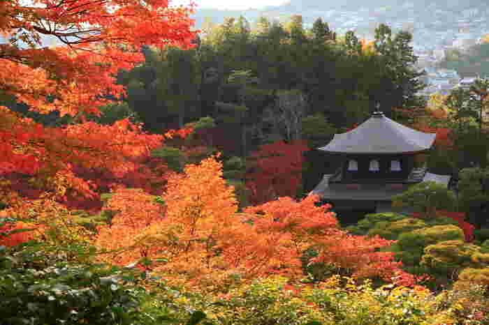 晩秋における観音殿(銀閣)の美しさは格別です。燃え盛る炎のように紅葉した色とりどりの樹々は、観音殿(銀閣)の美しさを引き立てています。