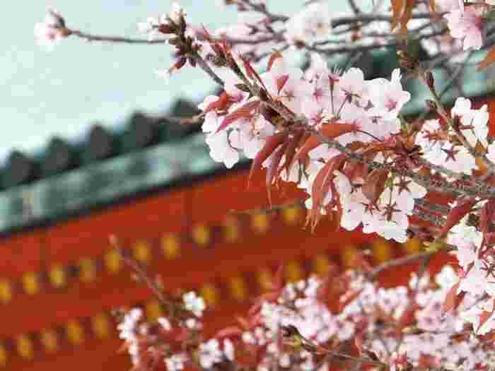 今のシーズン、ポカポカ陽気に誘われて出かける先といえば「お花見」ですよね♪今年はどこに桜を見に行きますか? こちらでは、京都の定番・穴場スポットをエリア別にピックアップしてご紹介していきます。お気に入りの場所を見つけてみてくださいね。