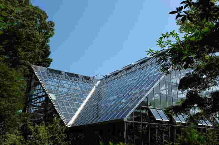 最後にご紹介するのは、薬用植物を扱う「東京都薬用植物園」です。普通の植物園とは異なり、薬用・有用植物専門の植物園で、薬にも毒にもなる植物や、染料や香料の材料になる植物などが展示されています。