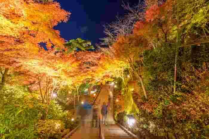長谷寺では、紅葉の季節限定で夜間特別拝観が行われています。普段見ることができない日没後の長谷寺の風景に、幻想的なライトアップが加わり幻想的な世界に。時間は日没後から18時までとちょっぴり短い時間ですが、ぜひ訪れたいですね。  夜間特別拝観期間:11月25日(土)~12月10日(日)
