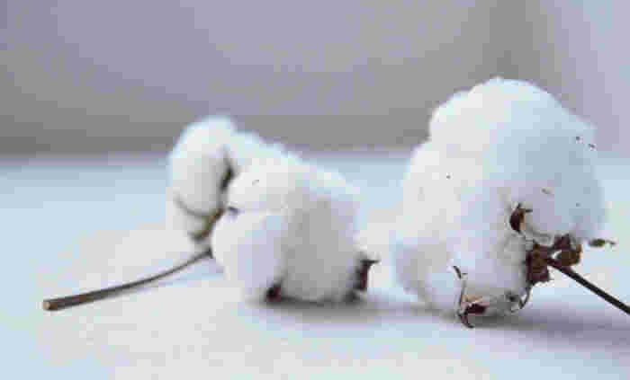 「プリスティン」は、オーガニックコットンの「アバンティ」のオリジナルブランドで、1996年に誕生しました。無農薬の有機栽培綿の輸入販売や、糸から生地、製品まで、一貫した企画製造販売を行っています。