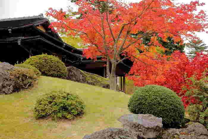 燃えるように色付いた200本以上のもみじに圧倒されてしまう、茶室から眺める日本庭園の絶景。見頃は11月上旬から中旬。また、11月いっぱいは通常非公開部分の庭園の特別公開である紅葉の神仙郷特別公開が行われます。
