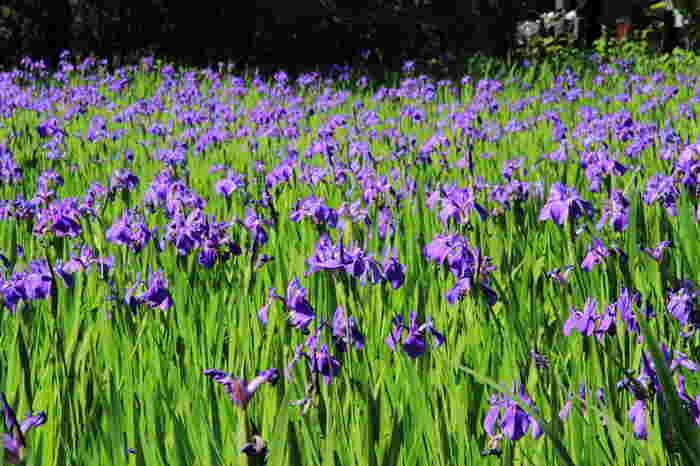 境内の大田池には、杜若が群生しており、国の天然記念物に指定されています。