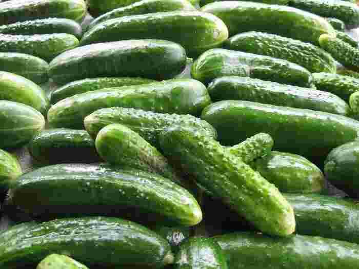 パリッとした食感とサッパリとした味わいで夏に食べやすいキュウリ。体を冷やす効果があると言われており、ほてった体を冷ますのにピッタリです。カリウムを多く含んでいて、余分な塩分を排出する作用や、体内の水分量を調節したり、むくみを解消する効果があるとされています。