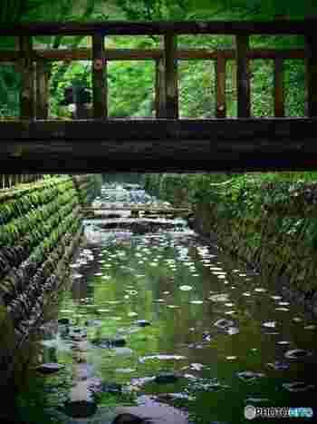 はじめにご紹介するのは、東急大井町線の等々力駅から歩いて2~3分のところにある「等々力渓谷」。東京23区唯一の渓谷で、都会のとは思えない緑豊かで心地良いスポットです。
