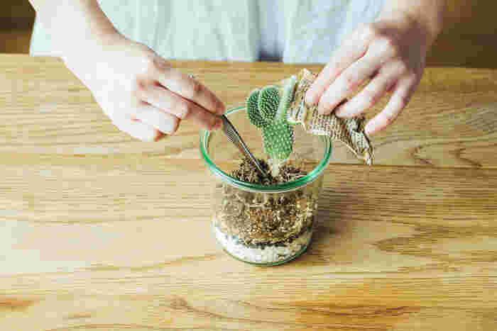 6.水ゴケに土をかぶせ、植物を配置します。サボテンは針があるので、柔らかく揉んだ新聞紙で摘むと手も傷つかないのでオススメです。置く場所が決まったら、ピンセットで根を土に埋めます。