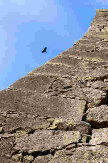 石垣の中でも「扇の勾配」と呼ばれる場所は必見です。ほぼ垂直に積み上げられた石垣は、目が眩むほどの高さです。この場所は、不戦の城・姫路城の防衛能力の高さを今に伝えています。
