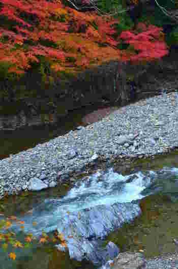 京都北山桟敷ヶ岳に水源を持つ清滝川は、京都屈指の紅葉の名所として知られる高雄エリア中心部を悠然と流れる清流です。す。