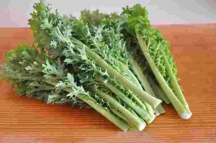 わさび菜は葉を外側からちぎって収穫していくことで、1年を通して長い期間食べることができる野菜で、スーパーに1年中あるところもあります。しかし、寒さにあたる期間が長いほど辛み成分が増えて強くなるという特徴があるので、鮮やかな緑としっかりとした辛さを楽しめる旬の時期としては、11月頃から翌3月初旬頃までとなります。