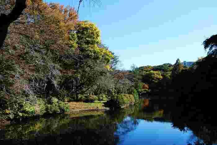 昭和33年に完成した「大池」構内数ヶ所の湧水を利用して湿地に造られました。  池の大きさは、約1万㎡、周囲800mとなっています。