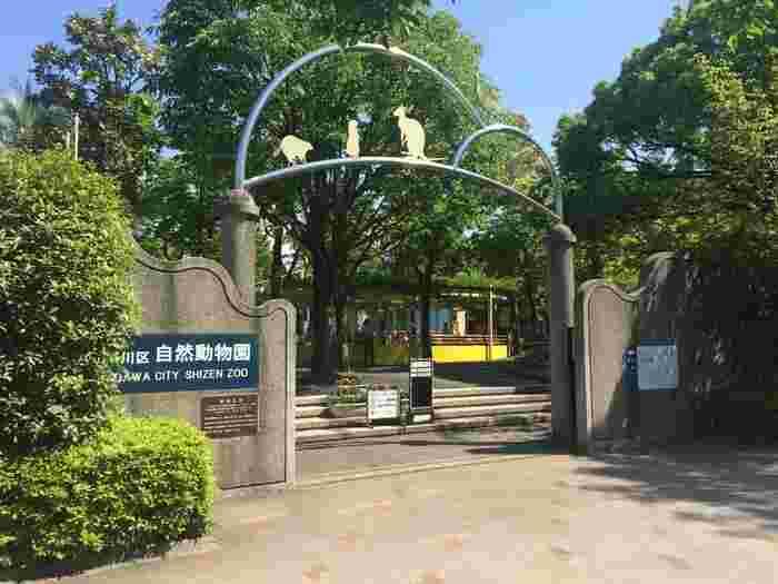 東西線の「西葛西駅」から歩いて15分ほどの行船公園内にある「江戸川区自然動物園」。区立の公園で、なんと入園無料なんです。動物園ができたのは1983年(昭和58年)のこと。広さ約4,900平方メートルの敷地をゆったり歩いてみましょう。