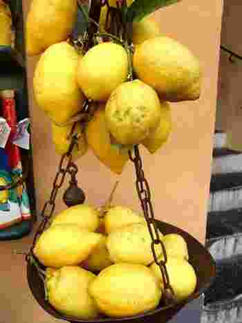 アマルフィのレモンは、とっても大きくて、皮ごと料理に使うそうです。 爽やかで少し甘みがあるのが特徴なので、パスタにもたっぷり使うのが、アマルフィ流!
