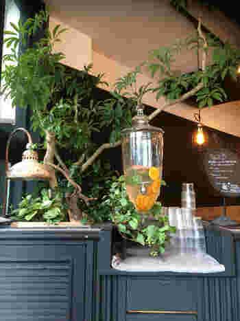 ダークカラーとウッドの落ち着いたインテリアに、鮮やかなグリーンが映えるハイセンスな空間で、大人のカフェタイムを楽しめます。