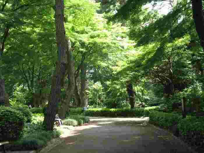 緑葉が透けて光り輝く新緑の頃も。 地面に木陰や葉陰を落とす夏の頃も。  黄色・橙色・赤色が溶け合う晩秋も。 落葉に地が覆われる冬木立の頃も。  【5月下旬の苑内「松の大廊下跡」付近の遊歩道】