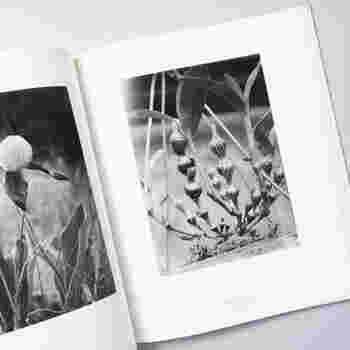 17歳の頃から写真集にはまってしまったという店主が集めた本たちは、インスタグラムなどで写真が身近になった私たちの心にも語り掛けてくるような雄弁さがあります。新進気鋭の作家さんの新作から、歴史的価値のある名作まで幅広いラインナップでも人気です。