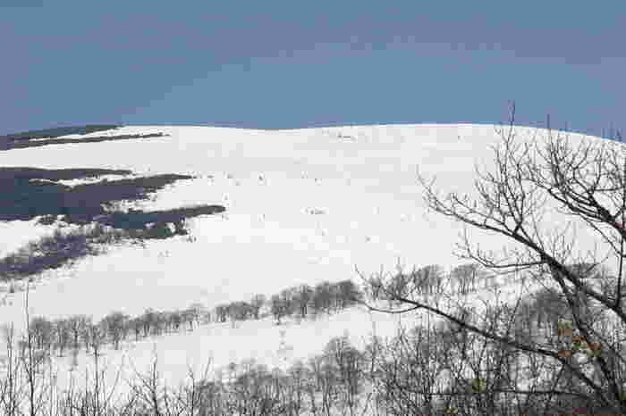 冬の間は閉ざされ、4月9日(日)にようやくオープンする「月山スキー場」は、夏スキーも楽しめる珍しいスキー場です。標高1600mの高地にゲレンデがあり、5月にはブナの新緑を眺めながら爽快なスキーが楽しめます。7月まで滑走可能。