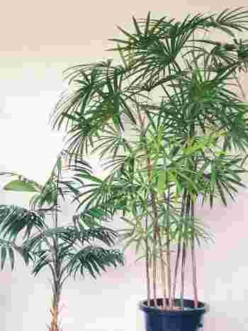 """観葉植物は洋風のイメージが強いですが、「和風の玄関」にも似合う種類がたくさんあります。こちらの写真のシュロチクやサンスベリア、テーブルヤシなどがおすすめです。お気に入りの観葉植物を飾って、しっとりと落ち着いた""""和の玄関インテリア""""を楽しんでみませんか?"""