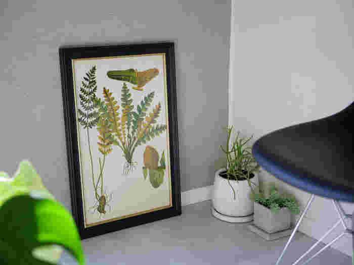 「DULTON」のプランツフレームは、本物の植物に引けを取らない存在感。さまざまな植物をモチーフにした標本のようなボタニカルアートは、日当たりを気にせず飾れるのがいいですね。