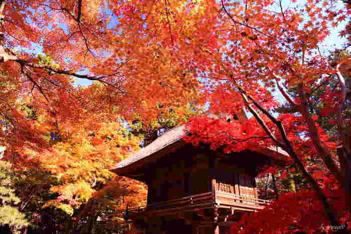 都心からのアクセス便利な場所にある紅葉スポット。約43ヘクタールの国指定天然記念物の境内林の紅葉は圧巻。禅修行の専門道場でもあるこちらでの紅葉巡りは話声や足音などに気を配ってマナーを守りながら楽しみましょう。11月中旬から12月上旬までが見頃となります。