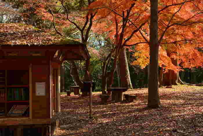 石薬師御門の最寄の「京都迎賓館」付近にある「母と子の森」では、秋には美しい紅葉が見られます。  どんぐり拾いを楽しんだり、野鳥の水遊びを見たり、ベンチでくつろいだり……。