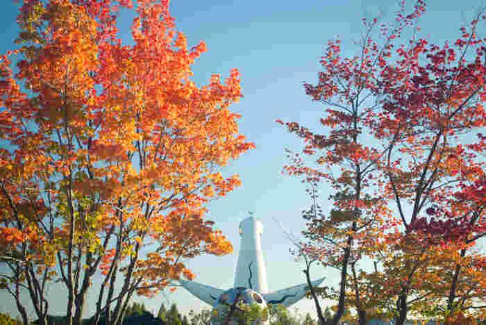 大阪府吹田市にある万博記念公園は、1970年に開催された日本国際博覧会(大阪万博)の跡地に造られた公園です。広大な敷地には、イロハモミジ、ヤマモミジ、プラタナス、イチョウ、トウカエデ、ソメイヨシノといった様々な樹木が植樹されています。