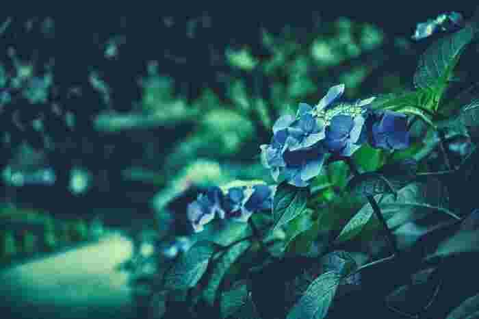 「じゃあね」というと、「さようなら」のニュアンスが強まります。一方、「またね」は、「また会える」、「また会いたい」というニュアンスが強まる言葉。たとえ、いつまた会えるかわからないようなときだって、「いつかまた会おう」という期待感を漂わせることができる素敵な挨拶言葉です。