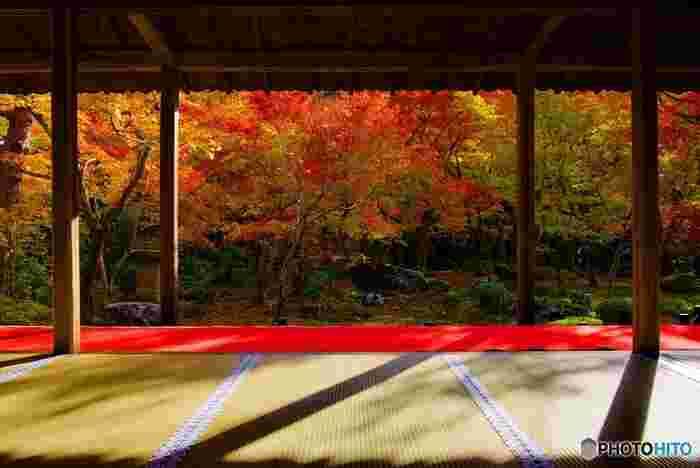 京都の紅葉スポットは、午後から特に混雑します。なるべくゆっくり見たいなら午前中に行くのがおすすめです。午前中に存分に紅葉を楽しんでから、近くで美味しいランチをいただきましょう!