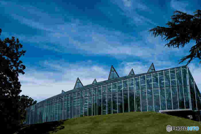続いてご紹介するのは、新宿御苑にある大温室。現在の建物が完成したのは、2012年。約5年の建て替え工事を経てリニューアルした温室は、中の植物はもちろん、建物そのものも美しいと評判です。