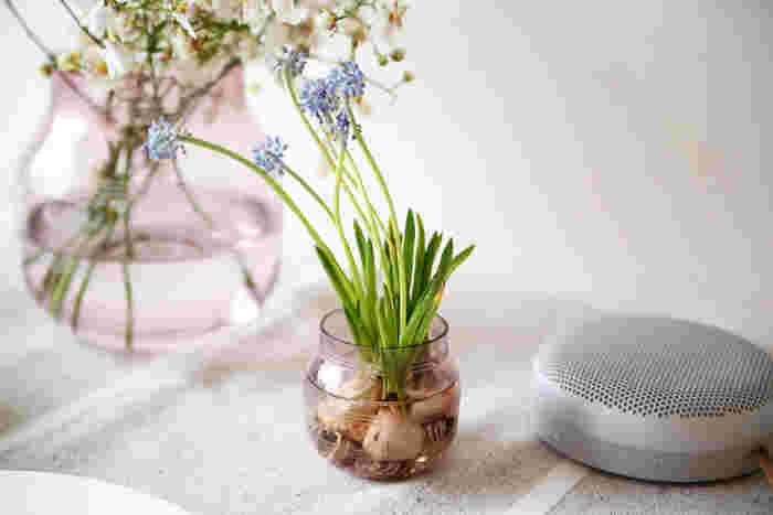 あの『Kahler(ケーラー)』の定番フラワーベース「omaggio(オマジオ)」にガラスタイプが登場しました。  特にこのプラムは一番春らしくて優しいカラー。大きさのバリエーションもあるので、ご自宅に合ったものを選ぶことができます。春の花を思いっきり飾ってみましょう。
